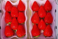 とろける甘さ!澳原いちご農園の完熟朝摘みスカイベリー(320g×2パック)
