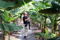 皮ごと食べられる国産無農薬バナナ「ひかりバナナ」