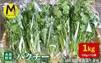 糸島産オーガニックパクチー1kg