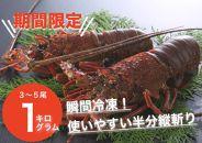 古澤水産 日南海岸伊勢海老 1㎏ (3~5尾) 9月~11月限定