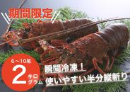 古澤水産 日南海岸伊勢海老 2㎏ (6~10尾) 9月~11月限定