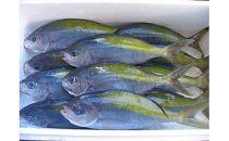 MJ001 室戸産新鮮地魚3種お造りセット