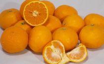 蛍飛ぶ町から旬の便り なつみオレンジ10kg 平武農園