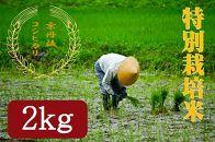 【ギフト用】令和元年度特別栽培米京丹後コシヒカリ2kg