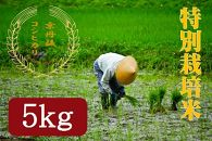 令和元年度特別栽培米京丹後コシヒカリ5kg