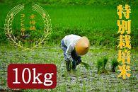 令和2年度 特別栽培米京丹後コシヒカリ10kg