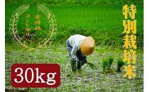 令和元年度特別栽培米京丹後コシヒカリ30kg