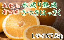 ★2021年発送★こだわりの和歌山有田産木成り熟成さつき八朔7.5Kg(Lサイズ)