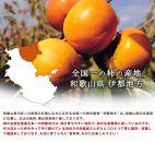【2020年11月上旬以降出荷】和歌山県産富有柿約7.5kg
