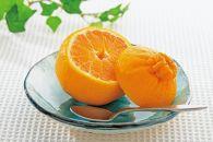 【2021年3月上旬以降出荷】太陽の恵みがたっぷりと注がれた春の柑橘デコ娘(不知火)約5kg