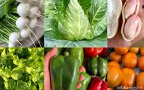 【4回お届け】季節のおまかせ野菜セット