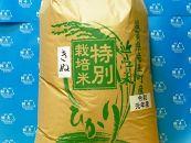 令和元年産近江米きぬひかり30kg(玄米)