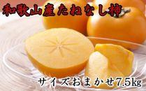 【2020年9月中旬以降発送】【秋の味覚】和歌山産の平たねなし柿約7.5kg(M・Lサイズおまかせ)