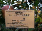 2019年度りんごの樹オーナー券(つがる・トキ・シナノスイート・ひろさきふじ・紅玉・王林・ふじ)