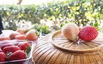雲仙いちごの赤桃セット「雲仙の花ぼうろ」と「恋みのり」【12月下旬から発送】