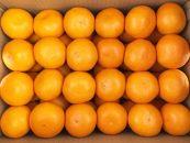 和歌山有田産みかん金箱約5kg(Lサイズ、Mサイズどちらかおまかせ)[2020年11月~発送]