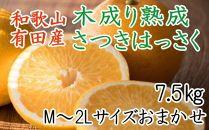 こだわりの和歌山有田産木成り熟成さつき八朔7.5Kg(M~2Lサイズおまかせ)