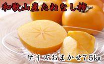 ■【秋の味覚】和歌山産の平たねなし柿約7.5kg(M・Lサイズおまかせ)
