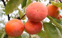 ■[甘柿の王様]和歌山産富有柿約3.5kgサイズ混合