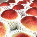 ■【夏の美味】フルーツ王国和歌山の桃約2㎏