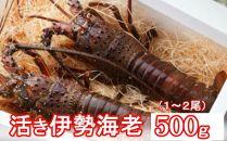 YJ036 活伊勢海老【500g】