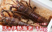 【2019.12.03取扱終了】 活伊勢海老【1kg】