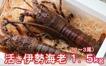 【2019.12.03取扱終了】YJ038 活伊勢海老【1.5kg】