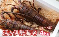 【2019.12.03取扱終了】YJ041 活伊勢海老【4kg】