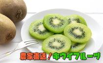 【大人気】農家直送!濃厚キウイフルーツ 秀品 約3kg