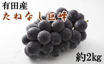 【先行予約】[新鮮・産直]和歌山有田産のたねなし巨峰約2kg