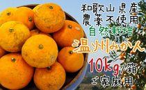 和歌山県産農薬不使用自然栽培温州みかん10kg