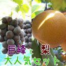 【先行予約】厳選!和歌山有田の濃厚巨峰と梨大人気セット