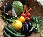 【定期便】旬の有機野菜8種類詰め合わせ ファミリーサイズ(2020年5月発送開始)