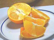 <西条市・氷見の茨木農園からお届け>極上あまくさ・愛果28 柑橘詰め合わせ小箱(各3個)