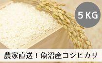 【令和2年産】農家直送◇魚沼産コシヒカリ「山清水米」精米5kg