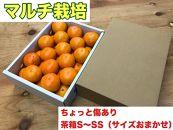 ちょっと傷あり【マルチ栽培・有田みかん】S~SSサイズ約2kg(サイズおかませ)