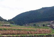 はぜかけ棚田米「米っ棚(まいったな)」5kg(中須産)減農薬米