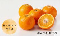 松山市産伊予柑 3L・2L (約10㎏)