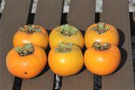 <受付は、10月より>糖度抜群!の多賀の太秋柿(大玉品種)6個入り