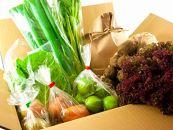 〔冬のギフト〕畑から直送!季節のお野菜のセット