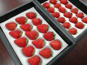 【数量限定】生産者厳選 山梨県産「朝採りいちご」2種類食べ比べセット 約400g×2箱