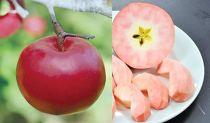 限定~神様がくれたりんご~ 「紅の夢」
