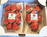 ※受付一時停止※【期間限定!】BerryGoodfarmの完熟朝摘みスカイベリー280g×2パック入