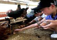"""福井のブランド""""福地鶏""""。採れたての卵を味わってください!【2名様より催行】「福地鶏の餌やりとたまご取り体験」と福井の海鮮料理満喫ツアー"""