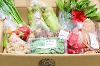 奄美の伝統!島野菜セット~その時期に旬の野菜をお届け!~