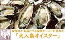 新栄丸がお届けする栄養たっぷりの真ガキ「大入島オイスター」