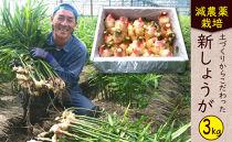 減農薬栽培「新生姜」<約3kg>★2020年10月中旬~2020年11月中旬の発送予定