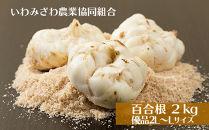 岩見沢市産百合根2kg(優品2L~Lサイズ)