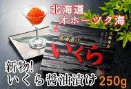 【数量限定】新物!いくら醤油漬250g(網走加工)