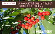 【先行予約】2020年7月発送!!フルーツ王国余市産さくらんぼ[南陽]2Lサイズ1kg【山本観光果樹園】
